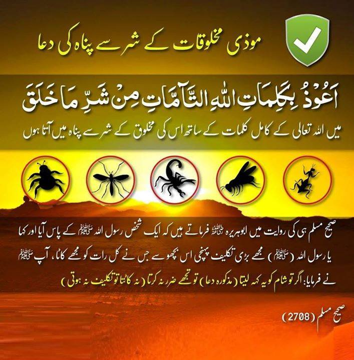 Photo of Dua to save yourself from Harmful creatures.