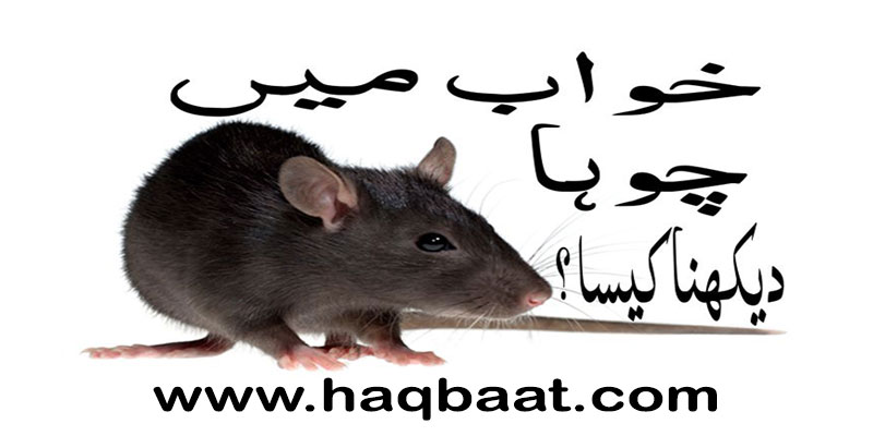 Photo of Khawab mai Choohai dekhna kesa? – Seeing Rats in a Dream