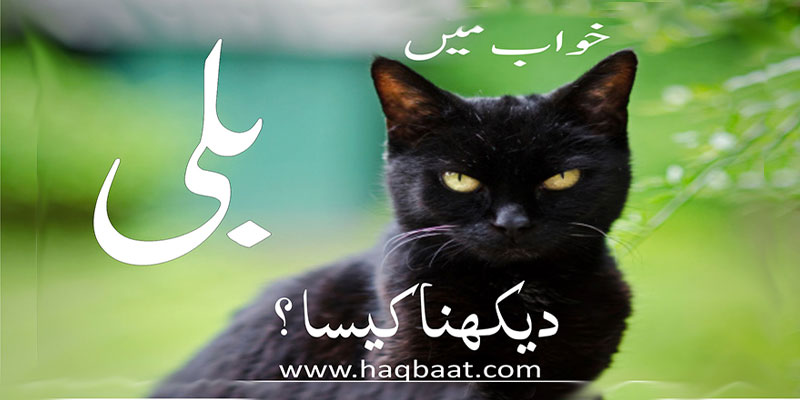 Photo of Khawab mai Billi Dekhna? – Seeing Cat in a dream.