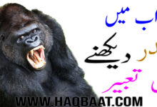 Photo of Khawab mai Bandar dekhnai ki tabeer | Monkey in Dream